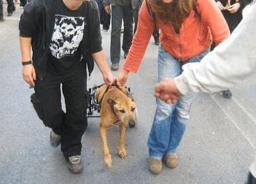Greece riot dog Kanellos in a dog wheelchair.
