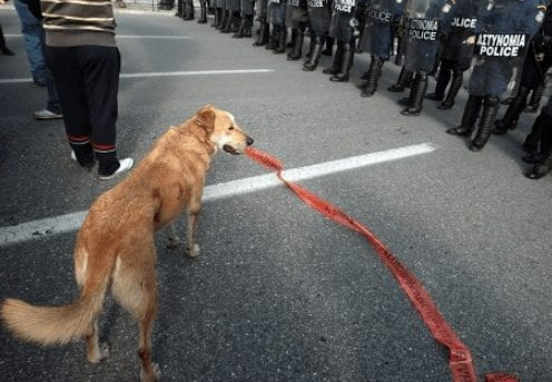 Loukanikos faces off with police during Athens protests.